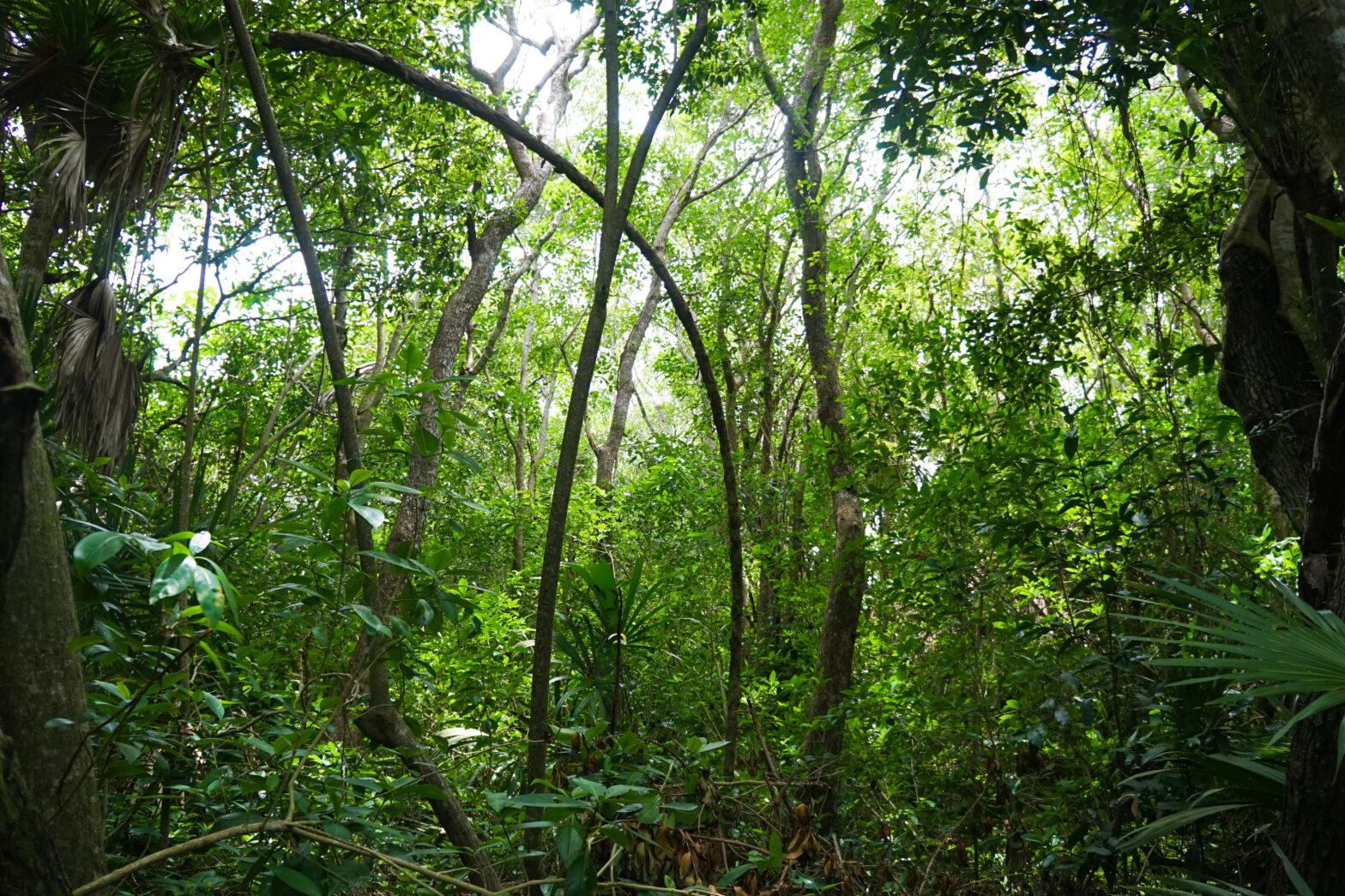 Mayan Forest Communities - NAPECA