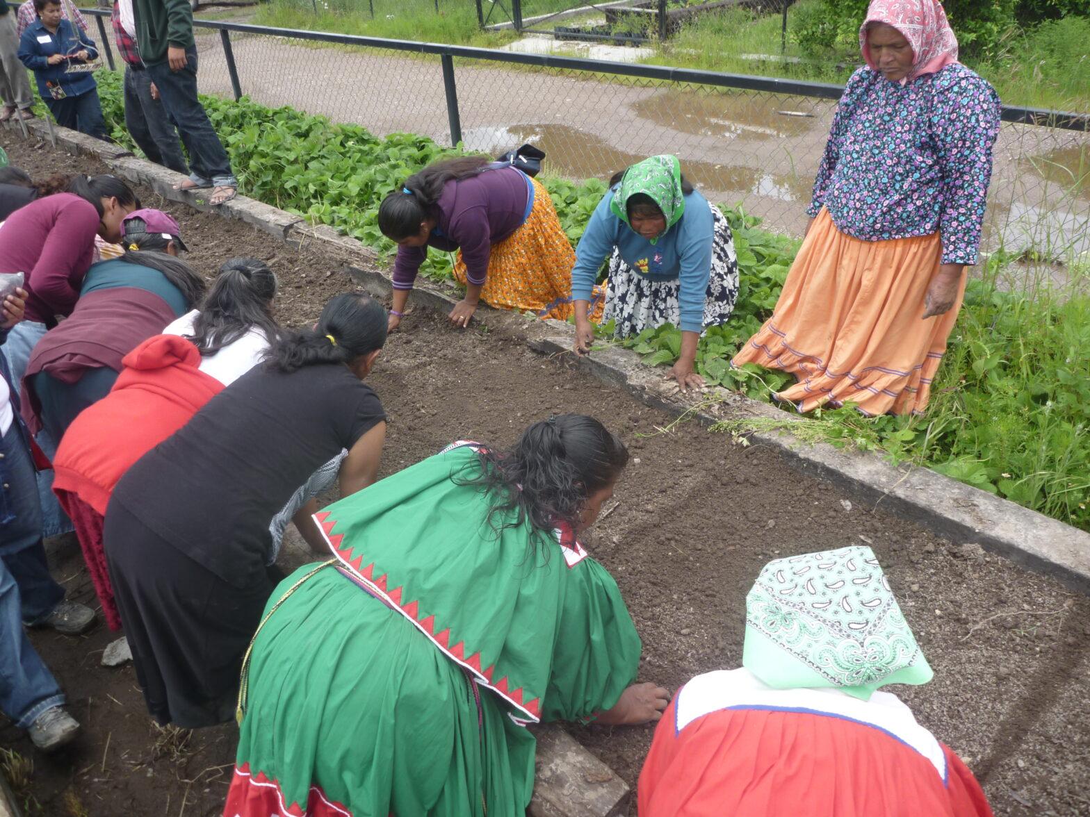 Edible greens - NAPECA