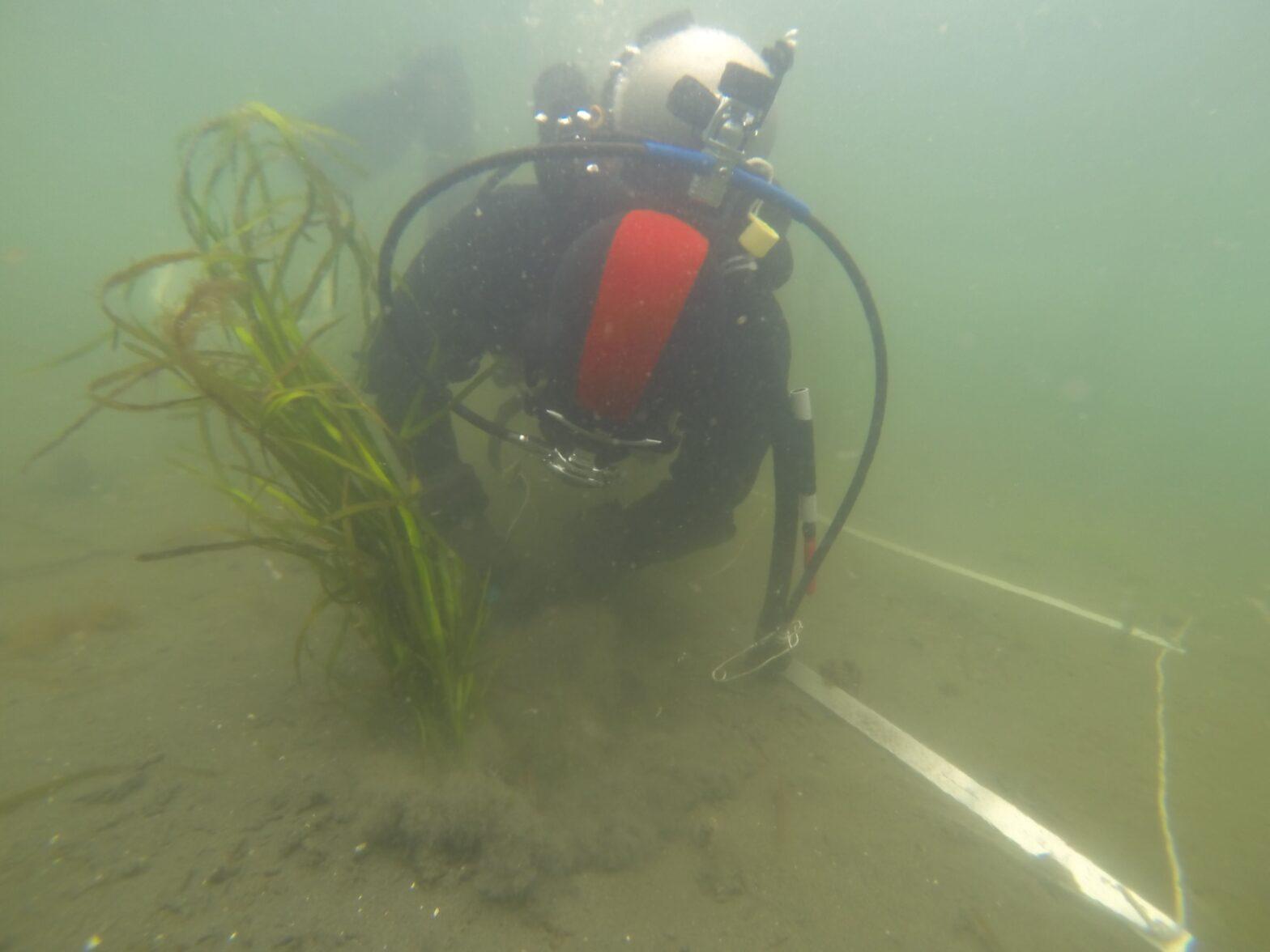 The K'omoks and Squamish Estuaries