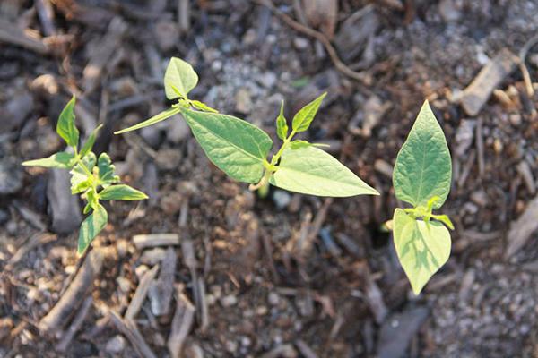 Preserving Agro-Biodiversity - NAPECA