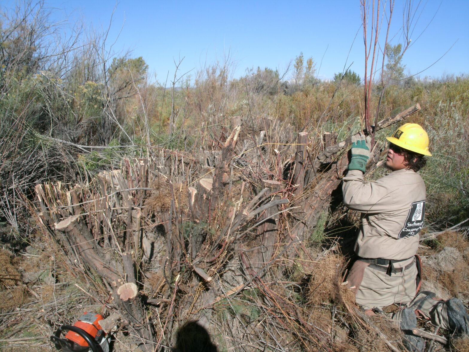 Dolores River Restoration Partnership (DRRP)