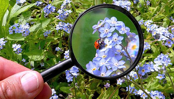 Environmental Observer
