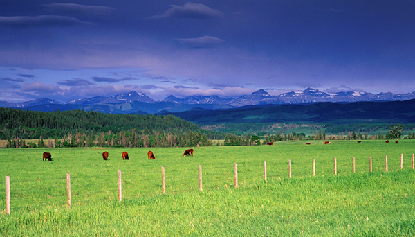 CEC Projects - Conserving North American Grasslands