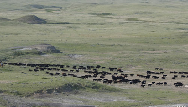 CEc Projects - Grasslands Management Initiatives and Partnerships