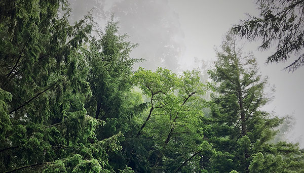 Forest Carbon Dynamics and Climate Change Mitigation Options