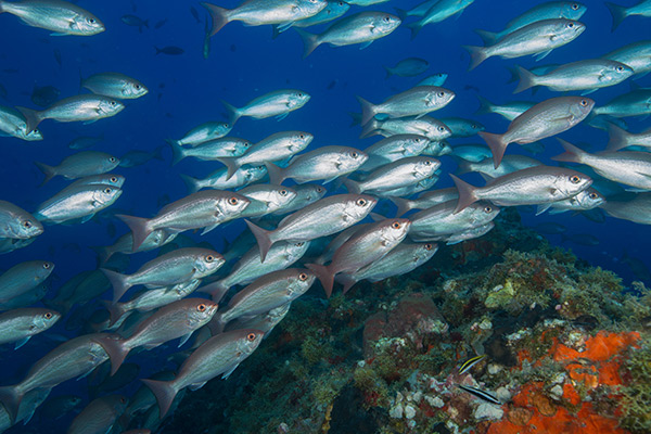 Climate Adaptation Toolkit for Marine and Coastal Protected Areas